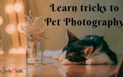 Pet Photography – Tips and Tricks (for the Best Pet Photos)