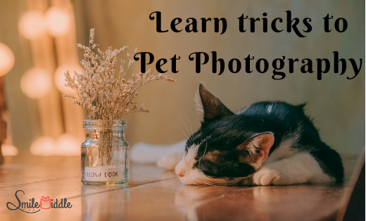 Pet Photography – Tips and Tricks