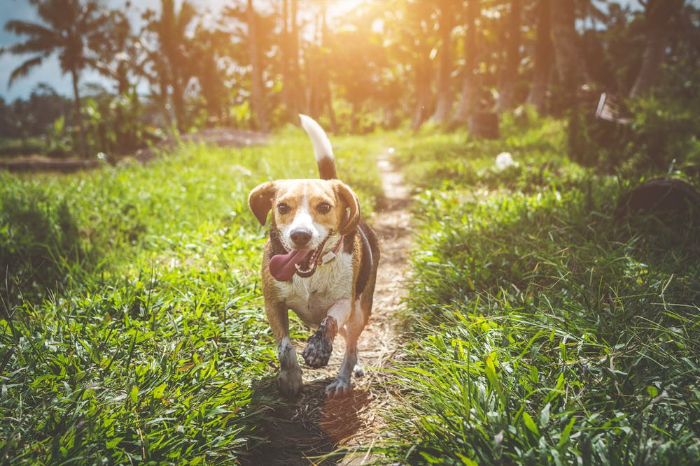 Golden Light before Sunset (Pet Photography)
