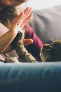 Cat giving hi-five with her paws