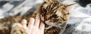 Cat Biting a Finger