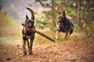 Dog training with sticks