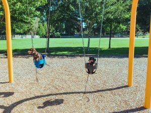 dog training at park
