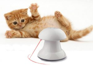 Laser toys for cats