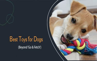 Best Toys For Dogs (Beyond 'Go & Fetch')