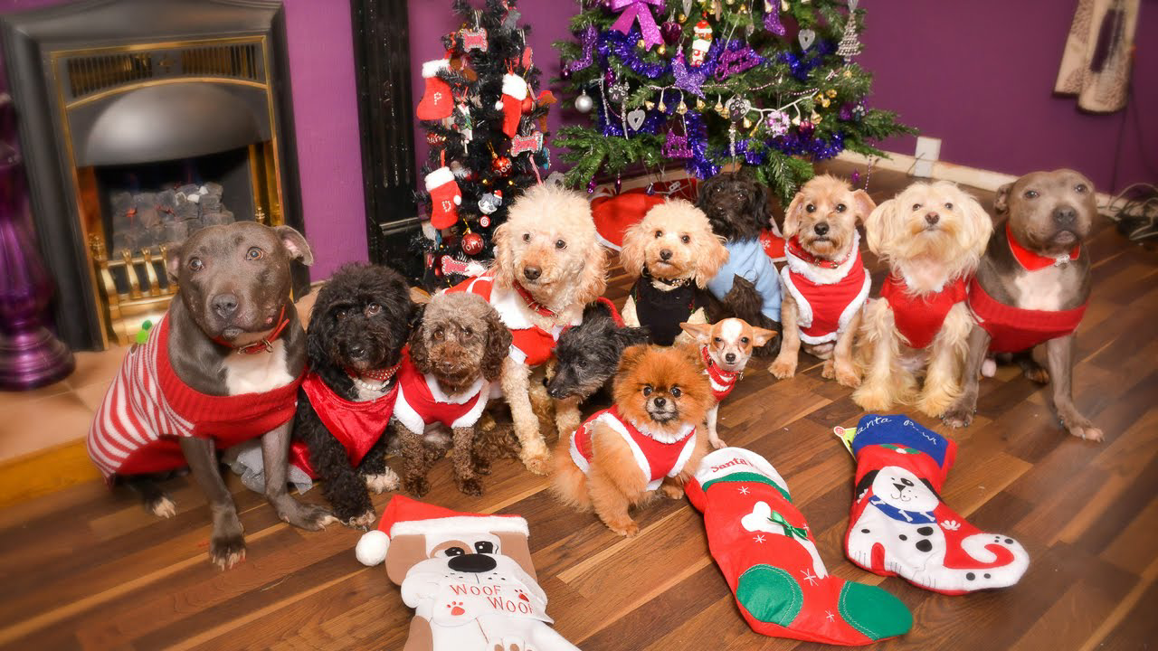Image result for christmas and dogs