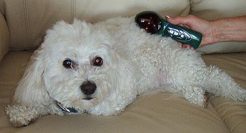 Dog Massager