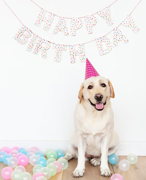 Dog Birthday pose