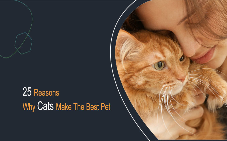 25 reasons why cats make the best pet