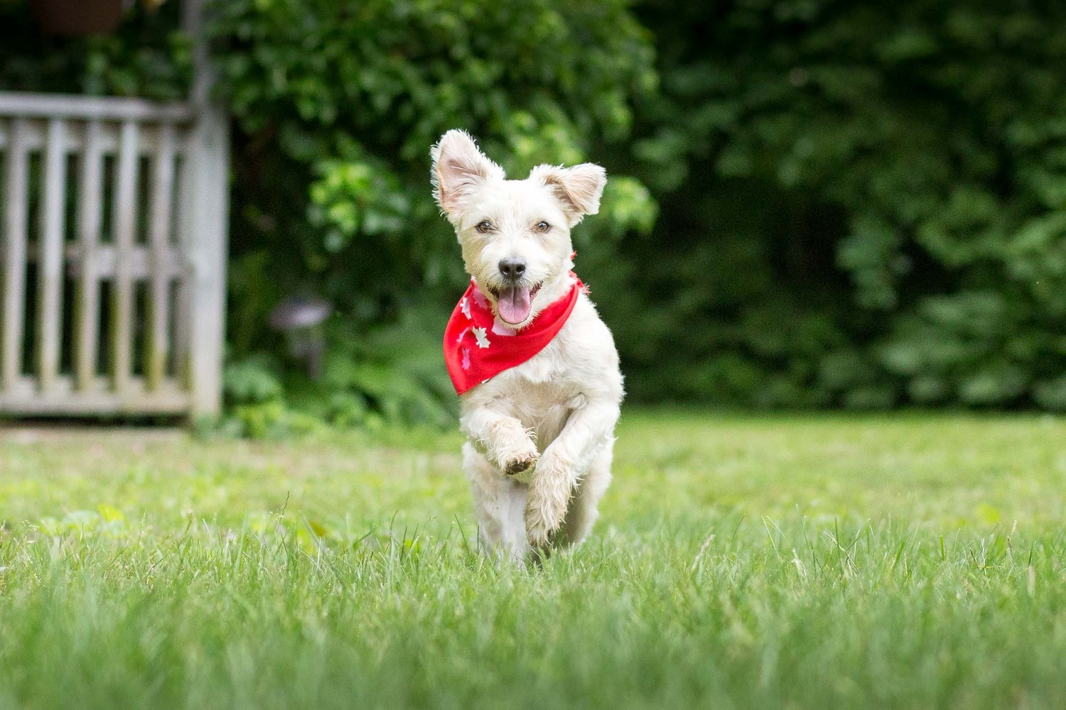 Burst Mode Photos (Dog Portraits from Photos)