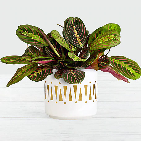 Plants as housewarming gifts