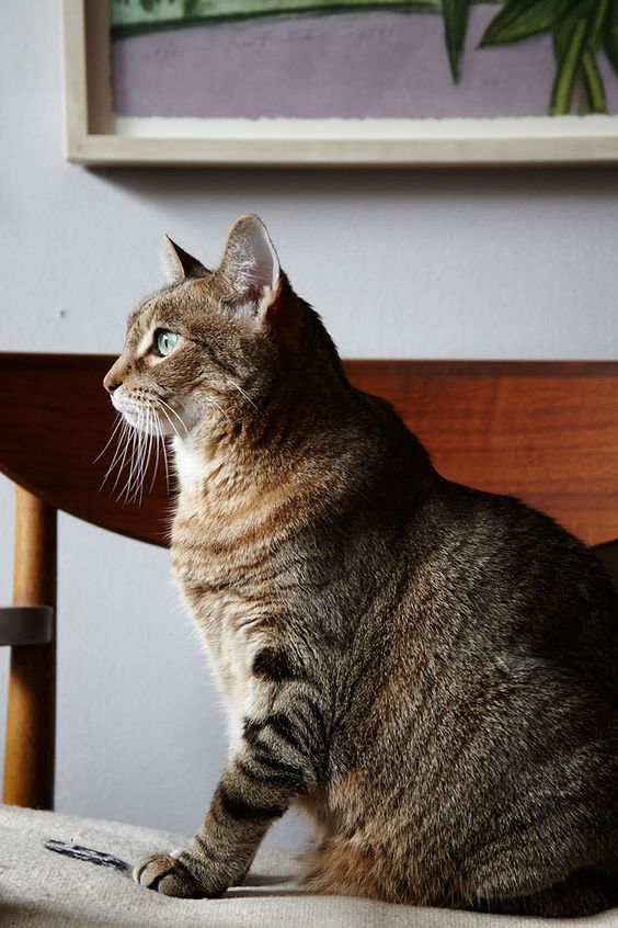 Take Some Dramatic Profiles (Cat Photography Tips)