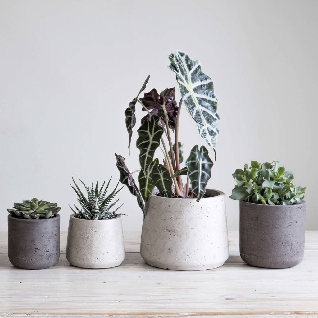 Plant Pots as thanksgiving Ideas