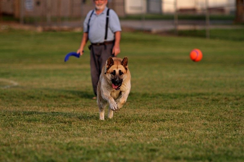 Teach Your Dog to 'Fetch'