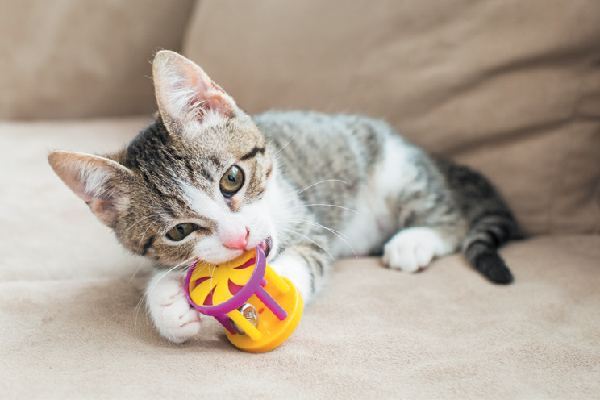 Cat Toys As Cat Birthday Gift