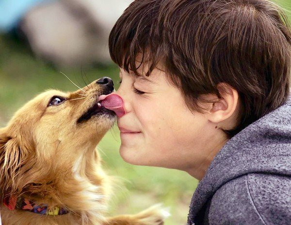 Teach Your Dog 'To kiss'