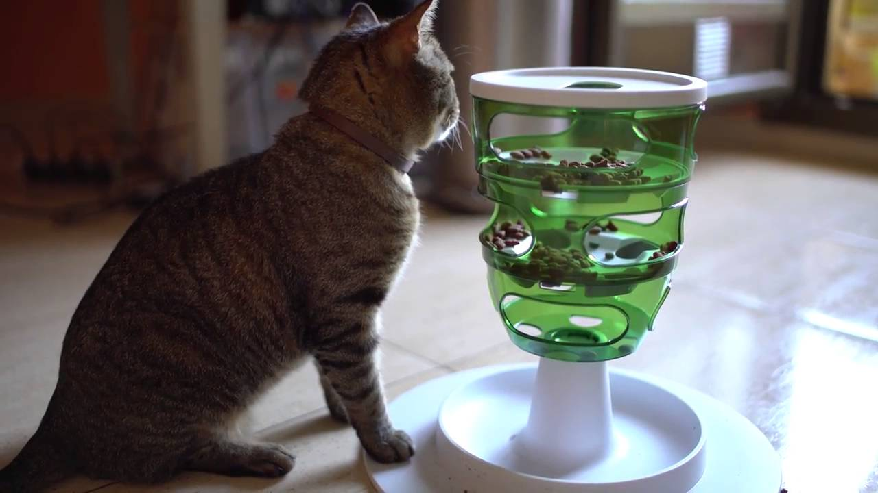 Cat Food Tree As Cat Birthday Gift