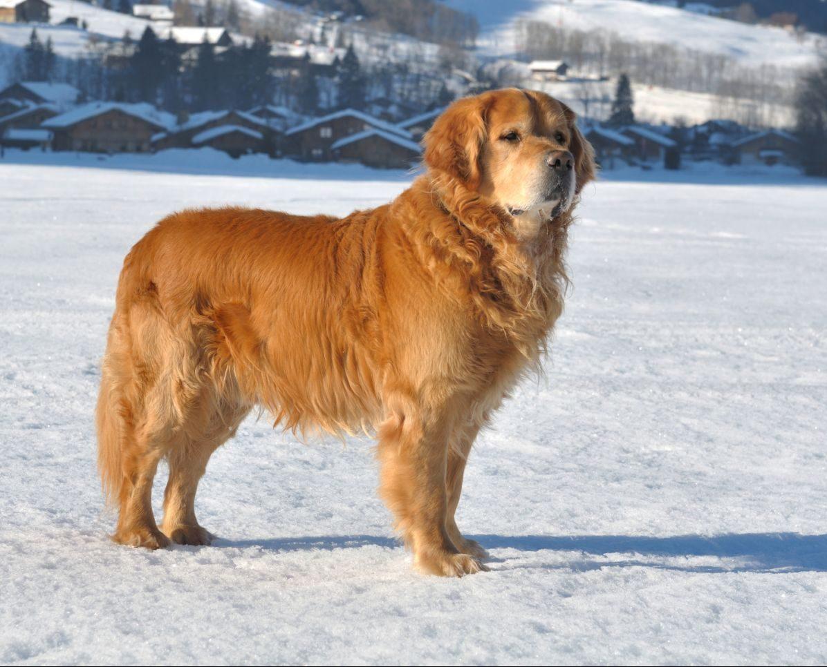 Curious & Confident Dog Body Language