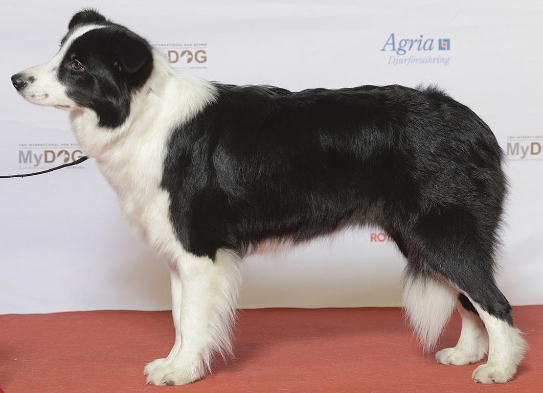 Deference Dog Body Language
