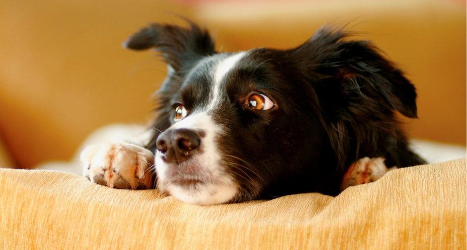 Stressed Dog Body Language