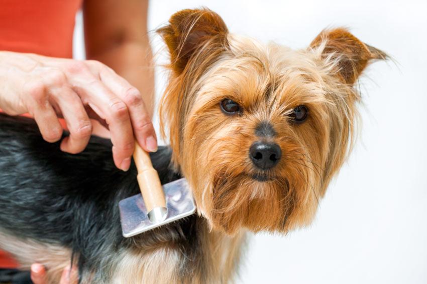 Brushing Dog Coat