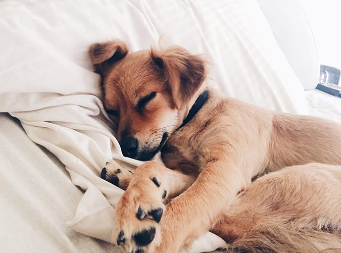 How much should be Dog sleeping?
