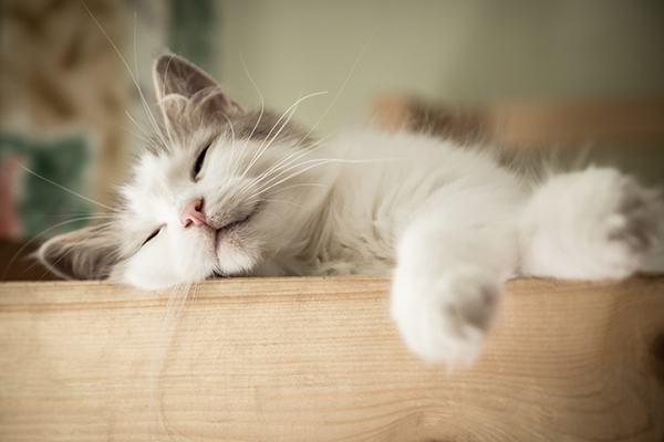 Your Cat's Sleeping Pattern