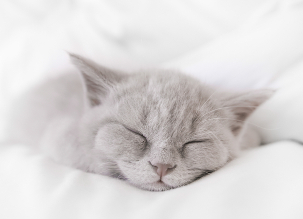What should be Done for a Healthy Sleep?