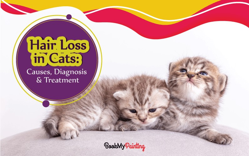 Hair Loss in Cats