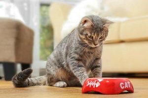 memorable cat loss gift