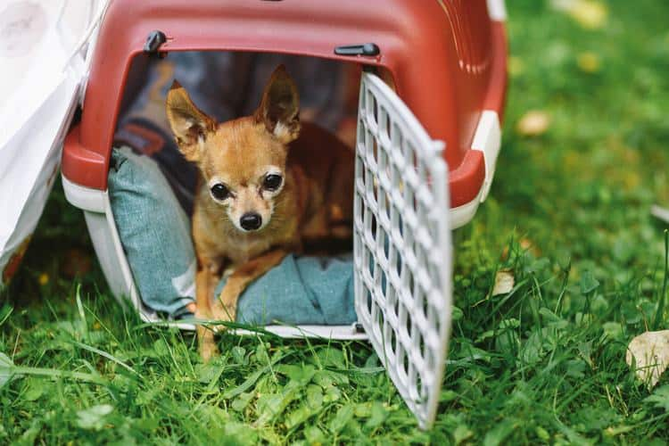 X-Small crates for dogs